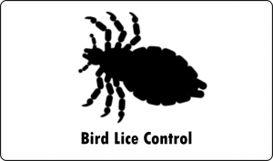 bird lice pest control port elizabeth