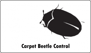 carpet beetle pest control port elizabeth
