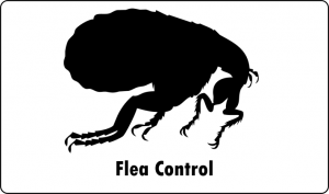 flea pest control port elizabeth
