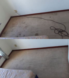 newly cleaned carpets port elizabeth true clean