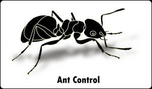 ant control port elizabeth