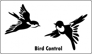 bird pest control port elizabeth