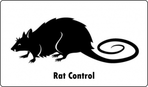 rat pest control port elizabeth