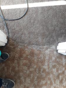 clean carpets port elizabeth