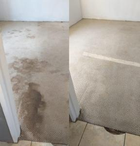 dirty carpets port elizabeth before and after