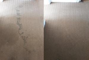 office carpets cleaned in port elizabeth